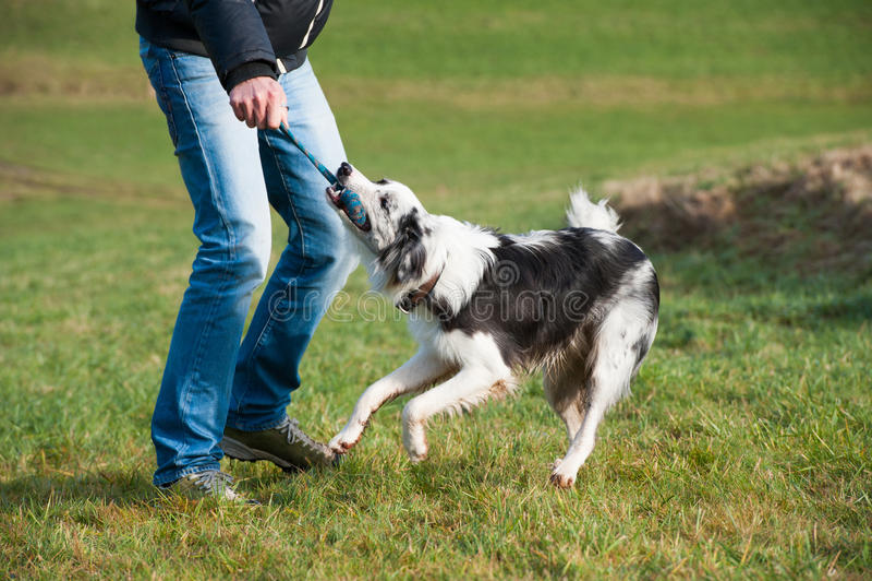 Uomo che gioca con il cane immagini stock libere da diritti