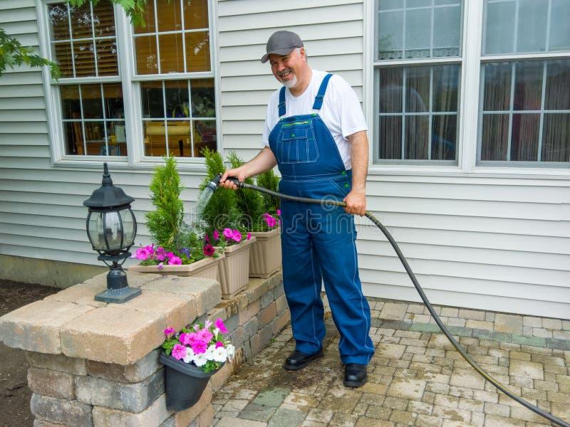 Uomo che innaffia i arborvitaes o thuja recentemente piantati fotografia stock