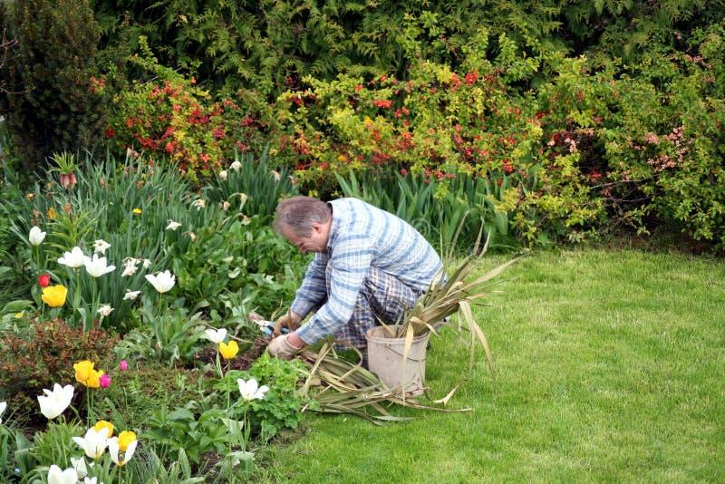 Uomo che pianta i fiori fotografia stock