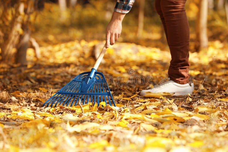 Uomo che pulisce le foglie sopra cadute con il rastrello fotografia stock libera da diritti