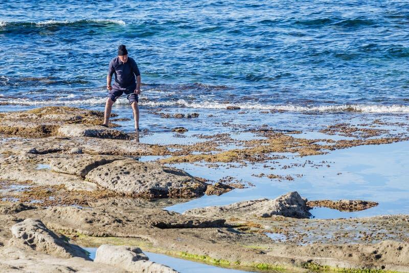 Uomo che raccoglie i ricci di mare fotografie stock