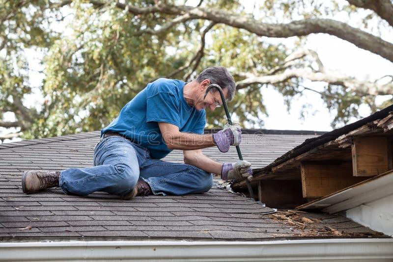 Uomo che solleva legno marcio dai fasci di tetto e dal Decking fotografia stock