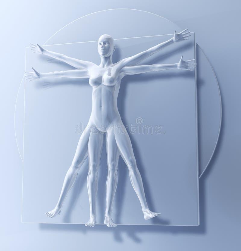 Uomo come donna, omo Quadratus del Vitruvian di Leonardo da Vinci illustrazione vettoriale