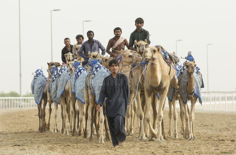 Uomo con i suoi cammelli in Al Khali Desert dello sfregamento al quarto vuoto, fotografie stock libere da diritti