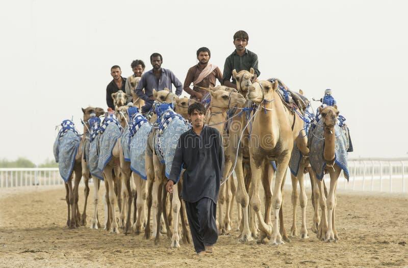Uomo con i suoi cammelli in Al Khali Desert dello sfregamento al quarto vuoto, fotografie stock