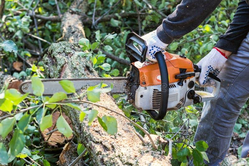 Uomo con la motosega che taglia l'albero fotografie stock