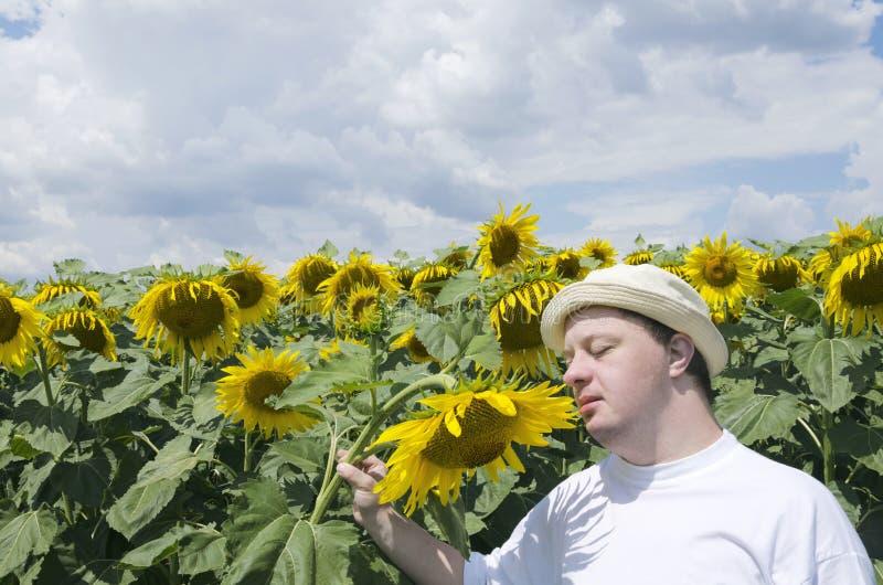 Uomo con la sindrome giù i girasoli odoranti nel campo Godere delle luci e della natura del sole immagine stock