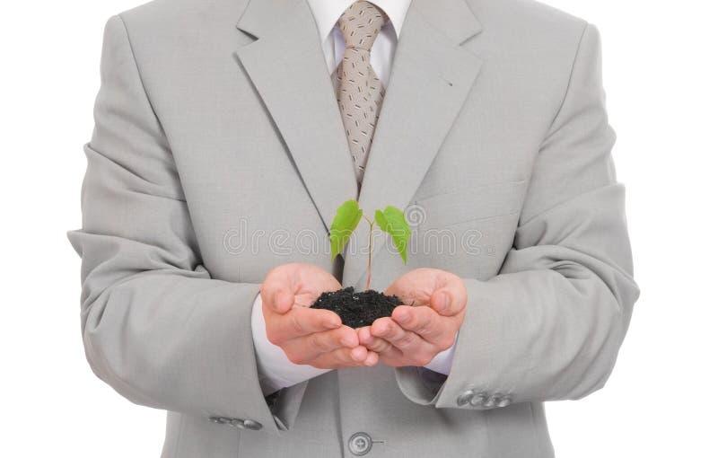 Uomo d'affari che giudica pianta verde isolata fotografia stock libera da diritti