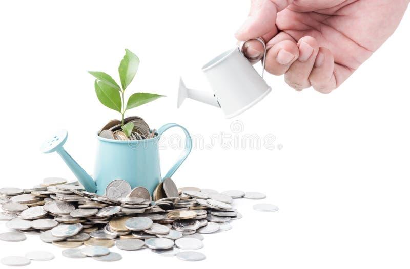 Uomo d'affari che innaffia un albero che cresce dalle monete d'argento su acqua immagine stock libera da diritti