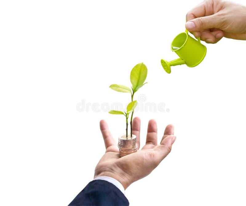 Uomo d'affari con l'albero e le monete a disposizione e mano che innaffia sull'albero superiore su fondo bianco, concetto di affa fotografie stock