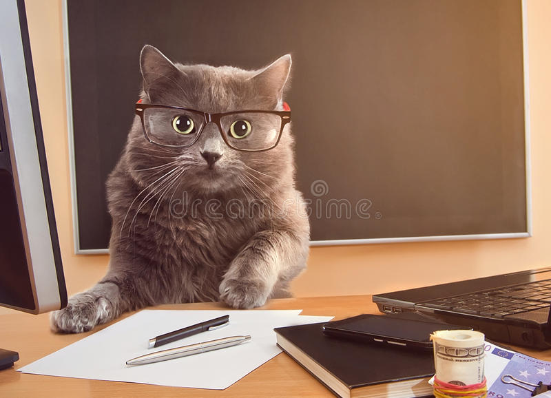 Uomo d'affari del gatto con i vetri alla tavola fotografia stock libera da diritti