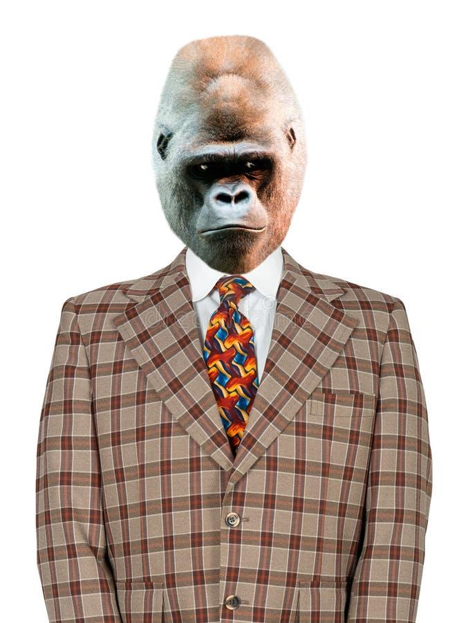 Uomo d'affari, vestito divertente e legame della gorilla, isolati immagini stock libere da diritti