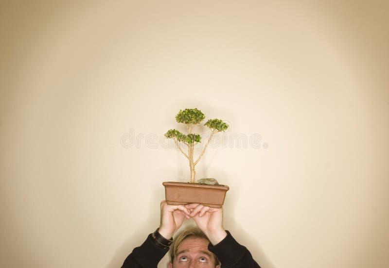 Uomo dell'albero dei bonsai immagini stock