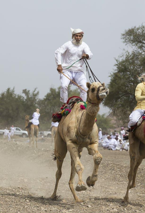 Uomo dell'Oman che guida un cammello su un coutryside dell'Oman fotografia stock