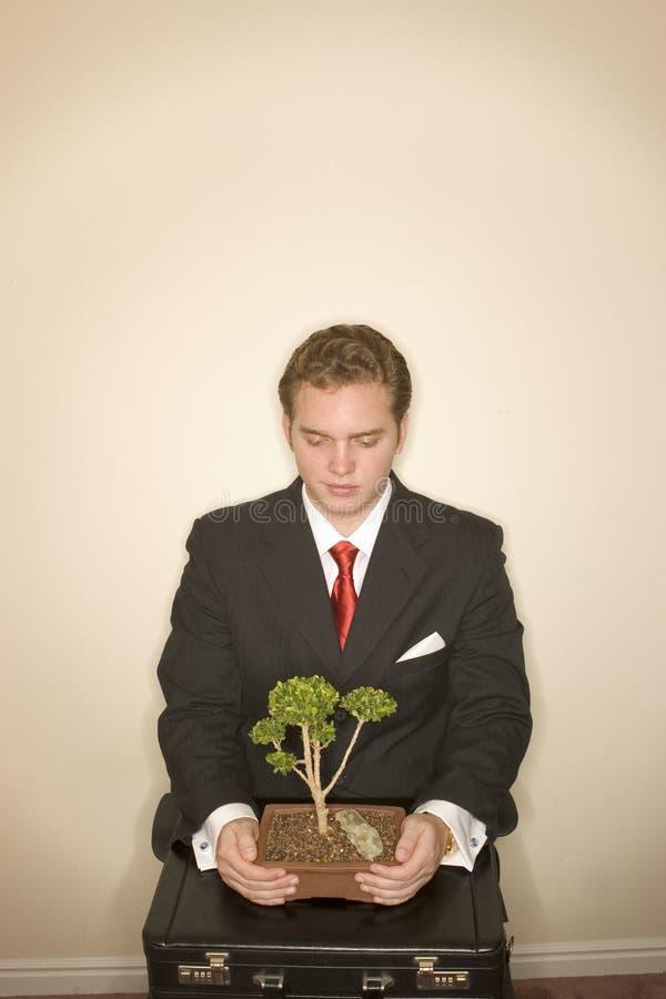 Uomo di affari con i bonsai 2 fotografie stock libere da diritti