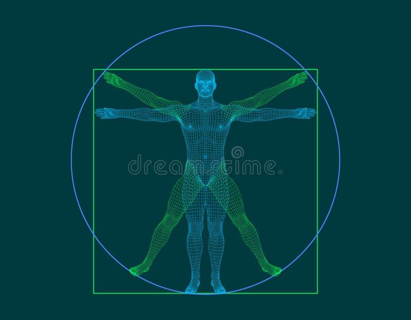 Uomo di Vitruvian Corpo umano di Wireframe Illustrazione del profilo di vettore royalty illustrazione gratis