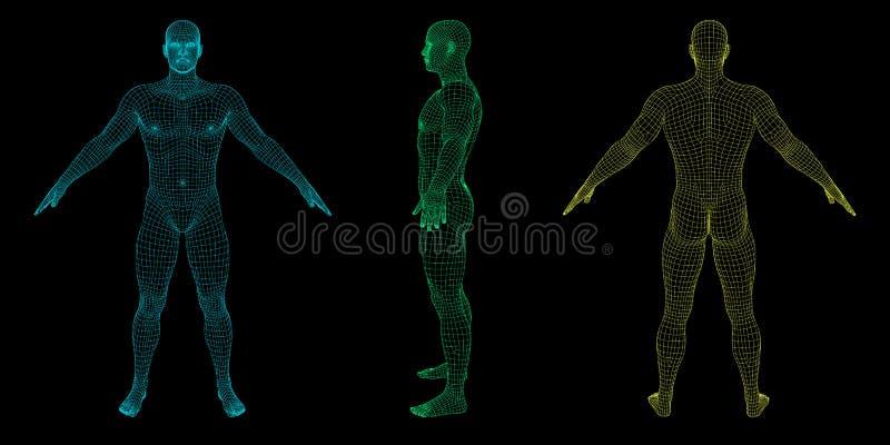 Uomo diritto Corpo umano di Wireframe Illustrazione del profilo di vettore illustrazione vettoriale