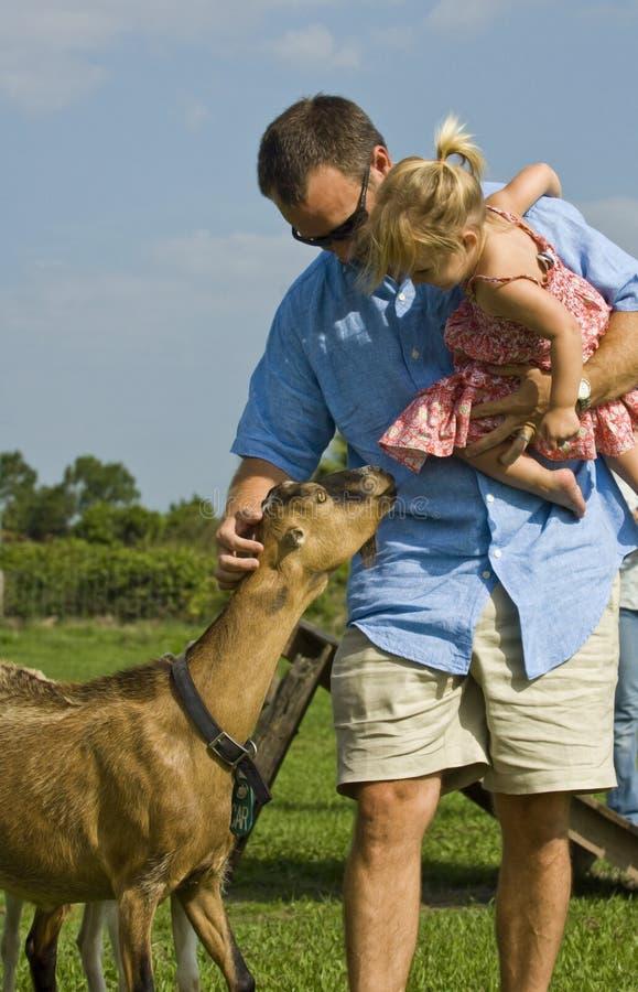 Uomo e bambino con la capra immagine stock