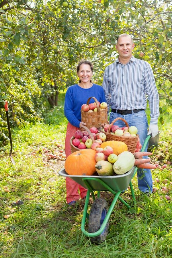 Uomo e donna con il raccolto delle verdure fotografia stock libera da diritti
