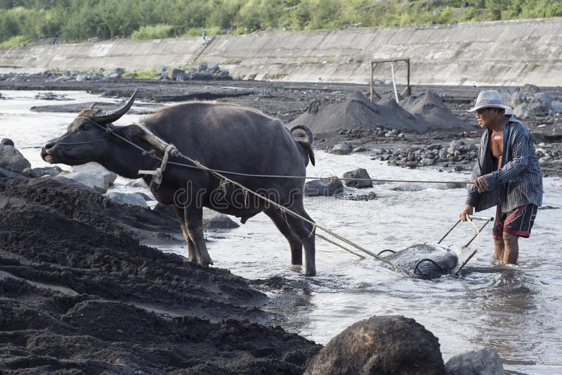 Uomo filippino ed il suo bufalo d'acqua raccogliere sabbia vulcanica nel fiume a Legazpi, le Filippine fotografia stock