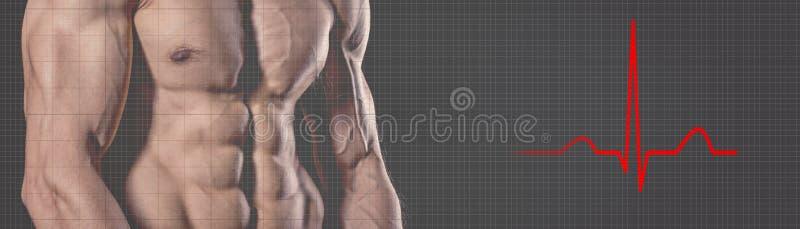 Uomo forte atletico Uomo di forma fisica dell'elettrocardiogramma di battito cardiaco Fi immagini stock libere da diritti