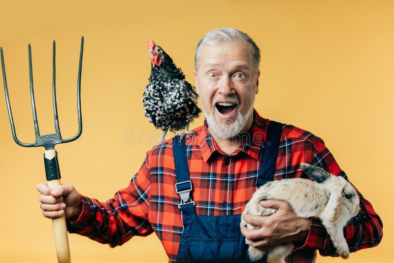 Uomo grigio-dai capelli felice in uniforme di modo che tiene un coniglio fotografia stock