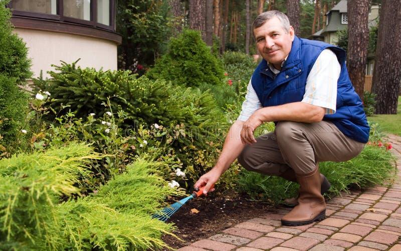 Uomo maggiore che rastrella giardino immagini stock libere da diritti