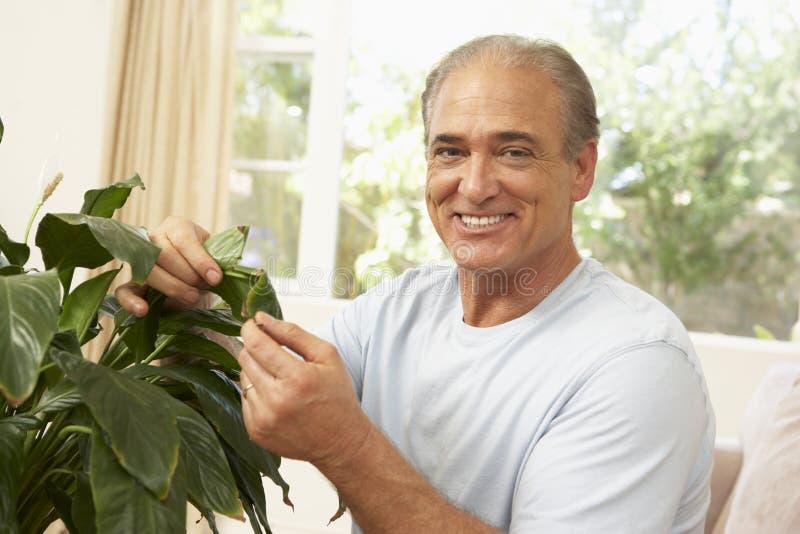 Uomo maggiore che si occupa del Houseplant fotografie stock libere da diritti