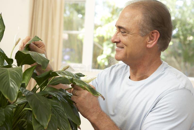Uomo maggiore che si occupa del Houseplant fotografia stock