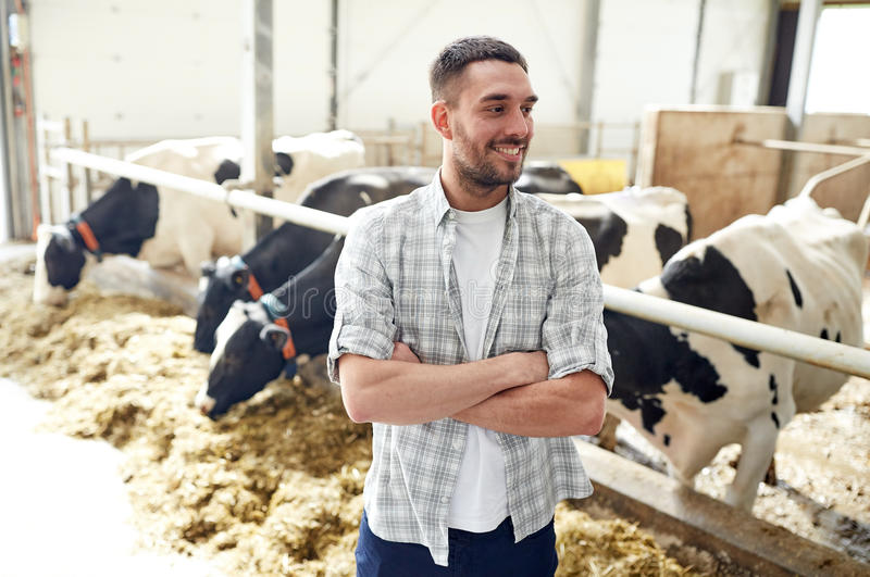 Uomo o agricoltore con le mucche in stalla sull'azienda lattiera fotografie stock libere da diritti