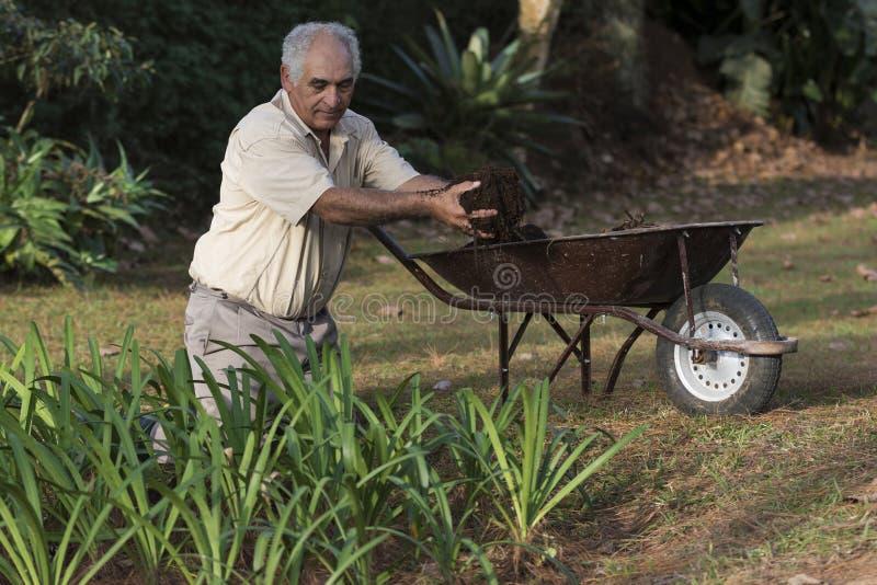 Uomo più anziano che lavora nel giardino con una carriola immagine stock