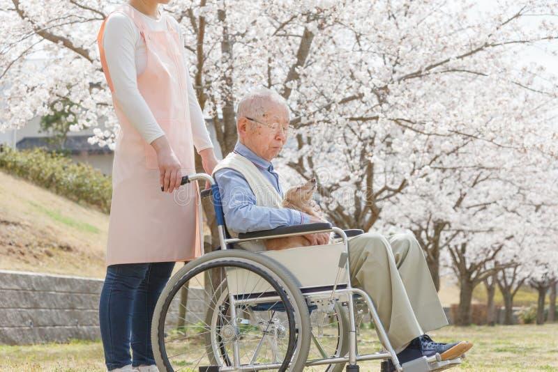 Uomo senior asiatico che si siede su una sedia a rotelle con il badante ed il cane immagini stock