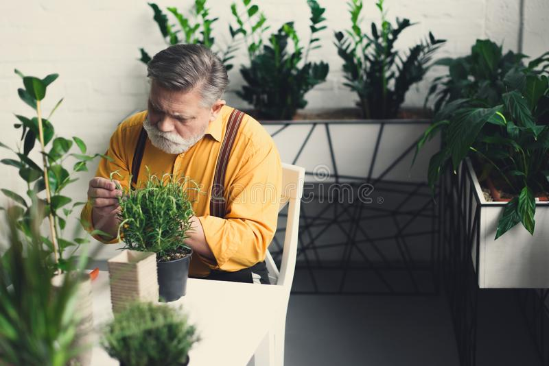 uomo senior barbuto bello che si siede alla tavola con verde fotografie stock libere da diritti