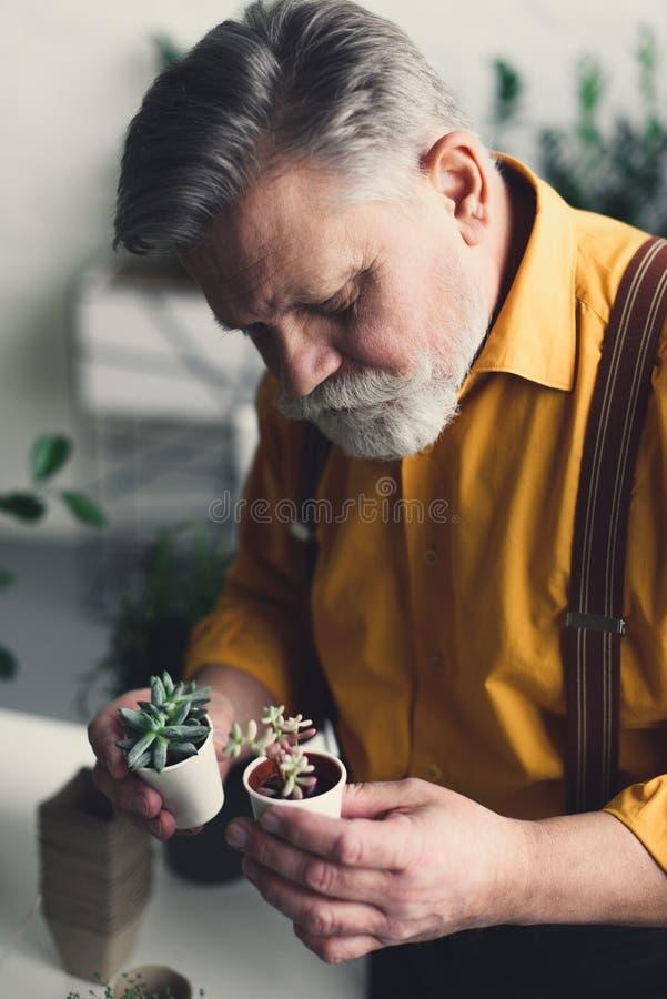 uomo senior barbuto bello che tiene i piccoli vasi da fiori immagini stock