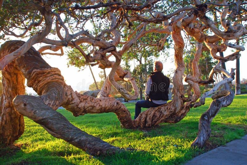 Uomo senior che gode della vista di tramonto nel parco di Heisler, Laguna Beach, CA fotografia stock