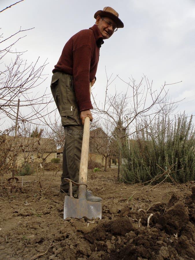 Uomo senior che scava nell'orto fotografia stock