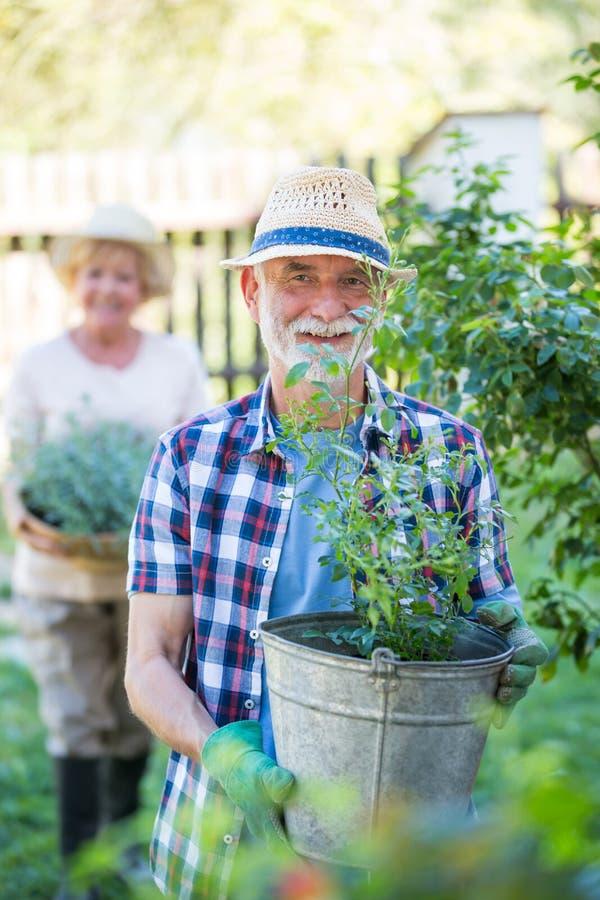 Uomo senior che sta con la pianta da vaso in giardino fotografia stock libera da diritti