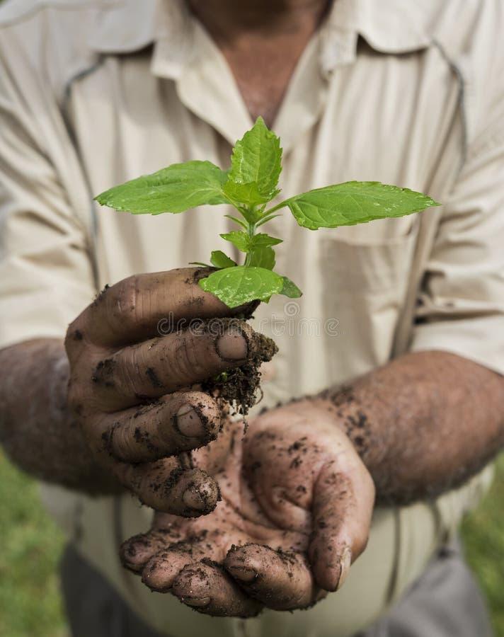 Uomo senior che tiene una giovane pianta verde fotografia stock