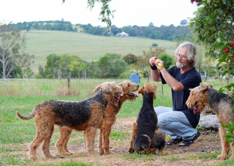 Uomo senior felice che gioca con il suo pacchetto dei cani leali amorosi del compagno immagini stock libere da diritti