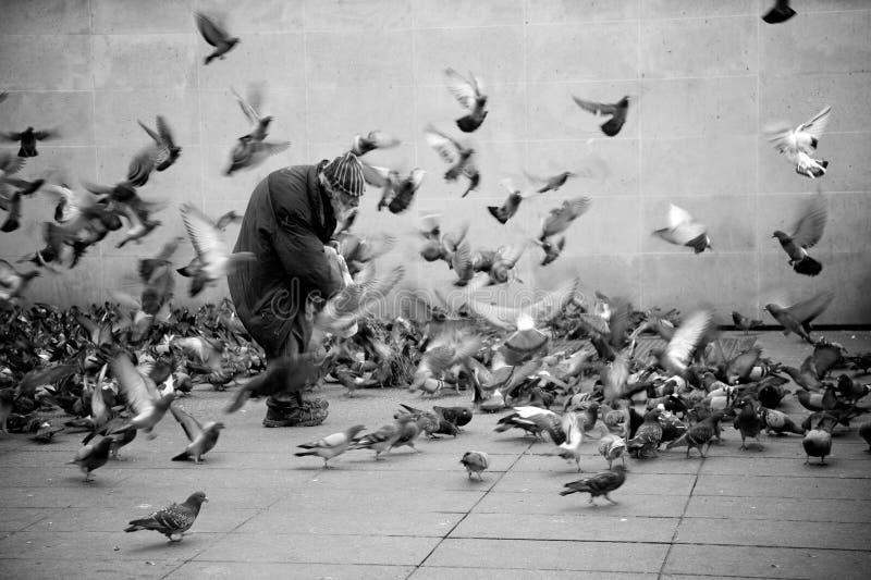 Uomo senza tetto dell'uccello fotografia stock libera da diritti