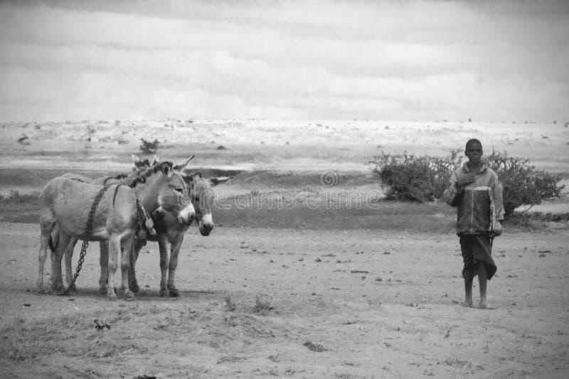 Uomo tanzaniano con una coppia di asini immagine stock