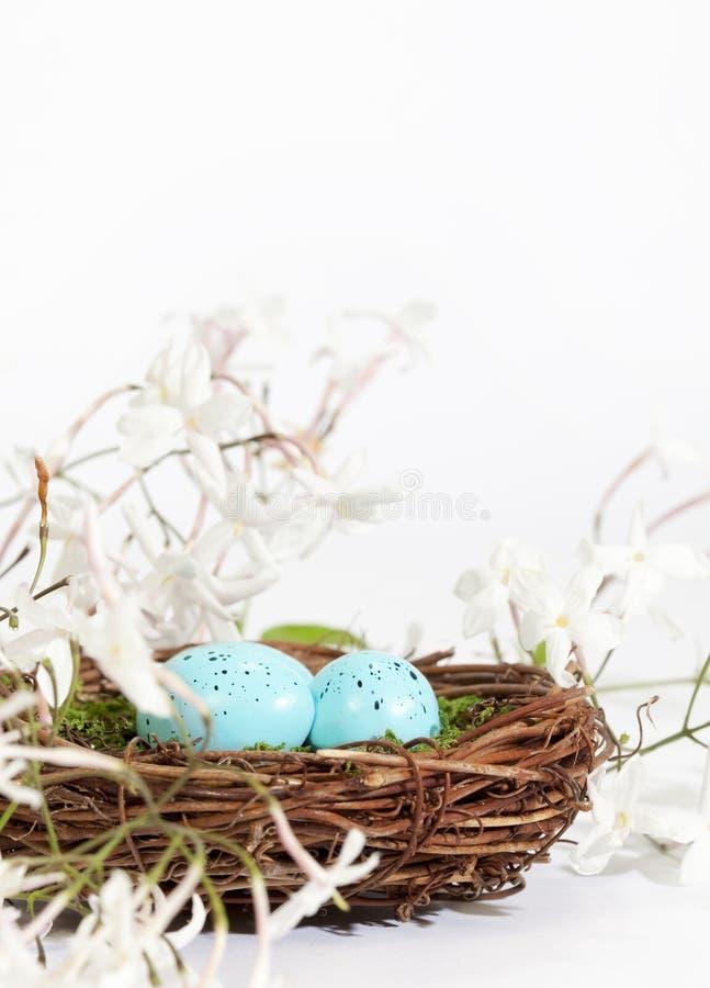 Uova del blu del nido fotografia stock libera da diritti