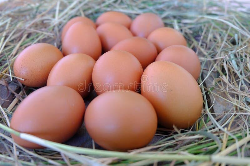 Uova del pollo in nido di paglia su vecchio fondo di legno fotografie stock libere da diritti