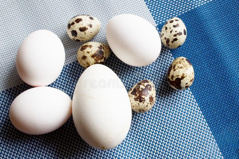 Uova dell'oca, del pollo e di quaglia fotografie stock