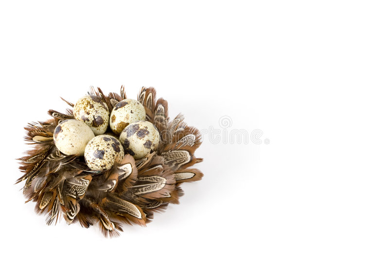 Uova di nido fotografia stock