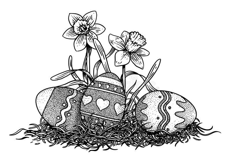 Uova di Pasqua con un'illustrazione del narciso, disegno, incisione, linea arte illustrazione vettoriale