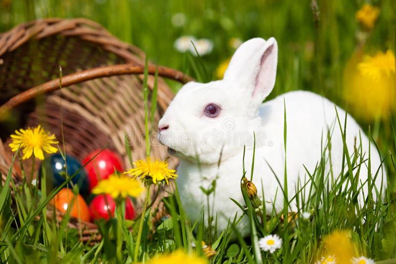 uova di Pasqua del coniglietto del cestino fotografia stock libera da diritti