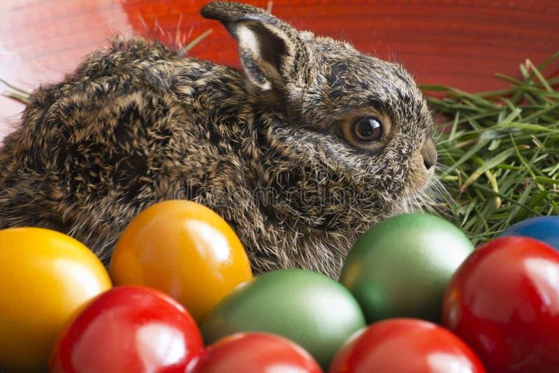 Uova di Pasqua e coniglietto fotografie stock libere da diritti