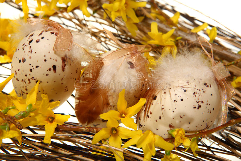 Uova di Pasqua Sulle filiali di forsythia immagine stock libera da diritti