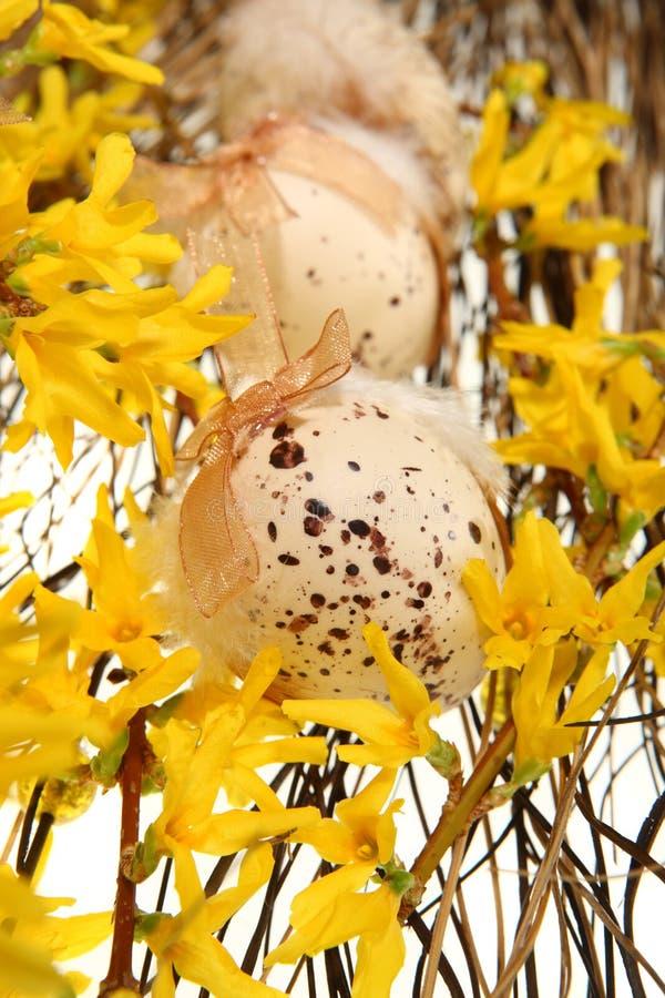 Uova di Pasqua Sulle filiali di forsythia fotografia stock